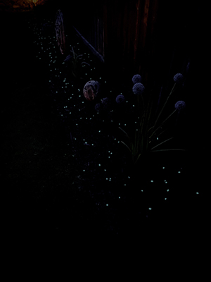 garden glow in the dark